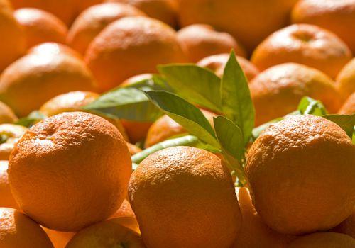 summer fruits in hindi